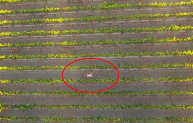 Primeiro vídeo pornô feito com drones nos EUA 1