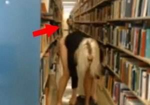 camgirl-haley-ryder-e-flagrada-pelada-na-biblioteca