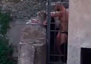 Casal é flagrado transando durante parada gay em Roma, Itália!